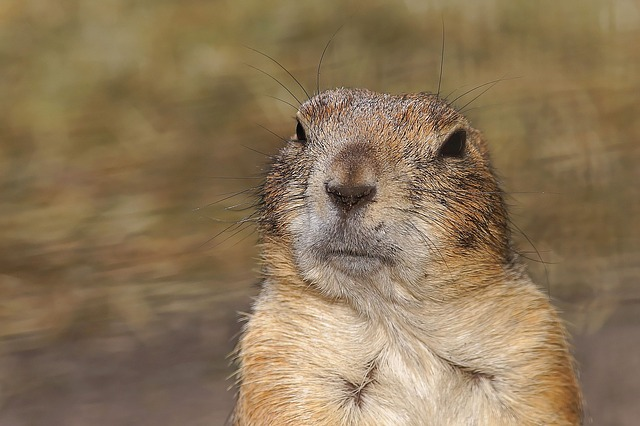 What to do when your ex-spouse is a Gopher parent